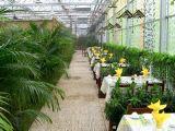판매를 위한 Galss Eco-Friendly 온실