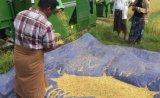 Mietitrebbiatrice del riso di flusso assiale 88HP di Longitudianl