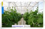 La serre chaude hydroponique de cloche de film de système la meilleur marché de prix usine pour des fleurs