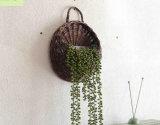 (BC-WF1036) Cesta Eco-amistosa de la flor del sauce natural hecha a mano