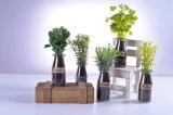 Usines artificielles plaisantes d'herbes de décoration de maison ou de bureau dans le visa en verre