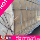 Rich Trade Assurance Plain Weave Wire Mesh / aço inoxidável Wiremesh