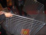 الصين مموّن من يغلفن يلحم [غبيون] صندوق