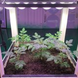 O diodo emissor de luz IP67 impermeável cresce a barra para o cultivo da planta