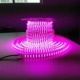 120LEDs 5050 장식 크리스마스를 위한 유연한 LED 밧줄 빛