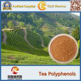 음식 급료 녹색 차잎 분말 차 Polyphenols