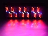 L'alto potere 1000W coltiva lo spettro completo del comitato LED per le piante