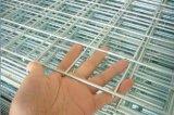 Migliore rete metallica saldata galvanizzata della rete metallica (fabbrica diretta)