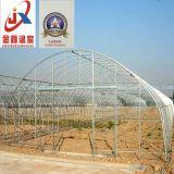 Solo palmo-invernadero del túnel por un cultivador de vegetales con estructura de acero