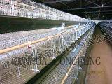 가득 차있는 자동 자동적인 계란 모으기를 가진 층 감금소의 프레임