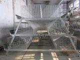Cage de poulet de poulette galvanisée par qualité