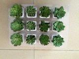 Succulent artificial superventas del cacto Gu-Jy06224109