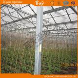 농업 자동 Venlo 유형 유리 온실