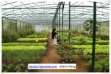 Estufa usada vegetal da película comercial da agricultura