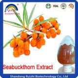 Polvo orgánico de la fruta de Seabuckthorn