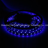 Striscia blu del chip 60LEDs 14.4W DC12V LED di colore IP20 SMD5050 di alta luminosità