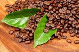Polvere istante del caffè dell'arabica del Vietnam del campione libero