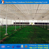 Manufacturer Specialized in Plastic Arch Greenhouse From Big Greenhouse in China