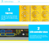 Incubateurs automatiques transparents d'oeufs à vendre