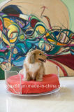 Cama de acrílico mais nova para adultos Shenzhen