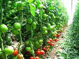 アミノ酸のカリウムの有機肥料のアミノ酸