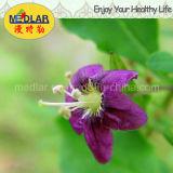Родной красный цвет Wolfberry здоровой еды