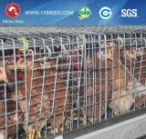 Cages de poulet/cages de grilleur/cages de volaille (A3B126)