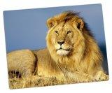 Painéis de alumínio da foto para animais bonitos