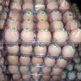 명확한 플라스틱 계란 쟁반 포장