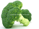 Sulforaphane CAS aucun extrait du broccoli 4487-93-7