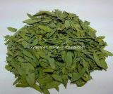 製造業者の供給のSennosideの自然なセンナの葉のエキス
