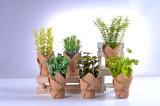 Hechas a mano hermosas plantas de la hierba artificial en papel envuelto para la decoración