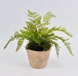 Varia hierba verde en crisol de arcilla