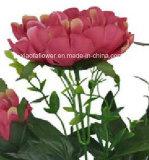 작약 (XF30021)의 인공 플라스틱 또는 실크 꽃 단 하나 줄기