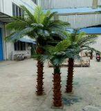Piante artificiali di uso esterno o dell'interno della palma Gu20170216090038