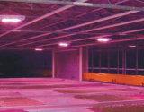 Schneller abkühlen und bessere umweltfreundliche LED wachsen helles 600W