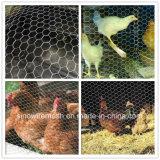 Rede sextavada galvanizada do engranzamento de fio para a gaiola do cão do coelho da galinha
