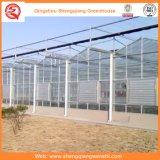 Système en verre de culture hydroponique de serre chaude pour des légumes/fleurs/fruit