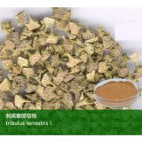 OEM Tribulus terrestris Extracto de GMP
