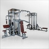 La stazione commerciale di ginnastica Equipment/8 mette in mostra le merci/le attrezzature forma fisica di Bodybuilding