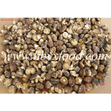 Sanligang 2.5-3.0cm ha asciugato il fungo di Shiitake liscio