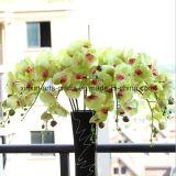 Phalaenopsis высокого качества 8 головок Silk цветет цветки реального касания искусственние