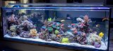 Hoogstaand en ultra Wit Glas Fishbowl