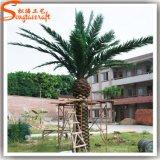 공장 가격 섬유유리 인공적인 대추 야자 나무