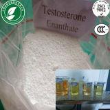 Testosterona esteroide Enanthate del polvo del edificio del músculo de la pureza del 99%