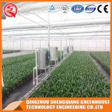 성장하고 있는 플랜트를 위한 농업 채소밭 PC 장 온실