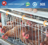De Kooi van de Kip van het Landbouwbedrijf van de Laag van Oeganda