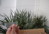 Folha acrílica do plexiglás da folha da folha desobstruída de PMMA