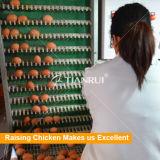 Автоматическое яичко собирая машину для цыпленка яичка птицефермы