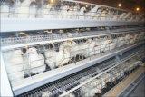Automatische de Levering van de Fabriek van China een Kooi van de Kip van de Laag van het Type